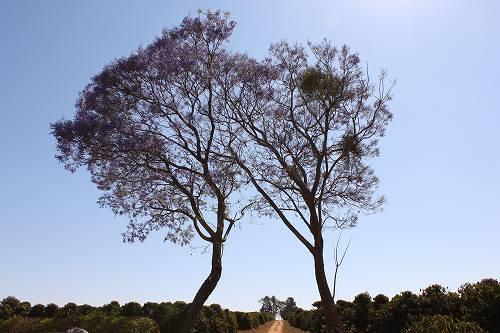 ブラジル・シャパドン ボタニカ農園